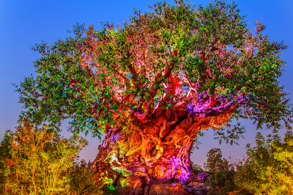 Disney's Animal Kingdom at Night - Art Gallery Disney | William Drew