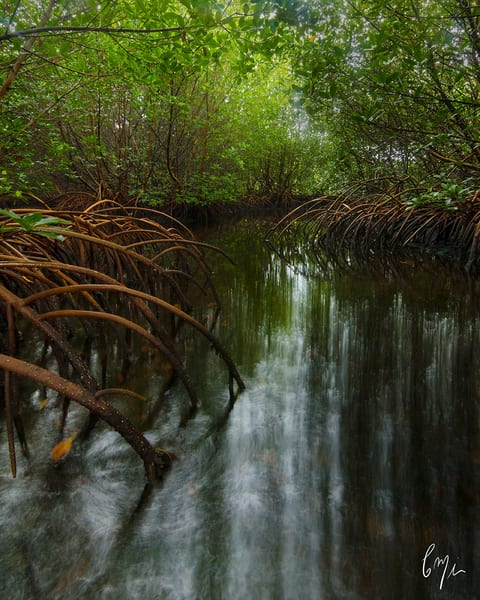 Constance Mier Photography - Everglades Backcountry