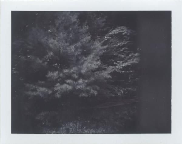 Long Needle Pine, Michigan Woodlands Art | Photographic Works and ArtsEye Gallery