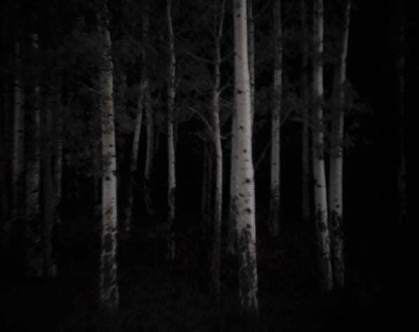 Diana's Forest Art | Photographic Works and ArtsEye Gallery