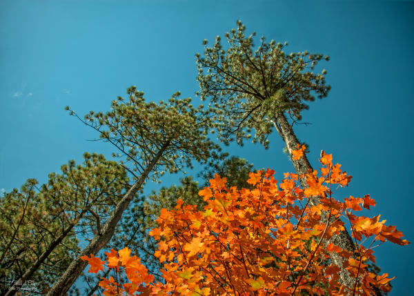 Photo of Colors of Fall, d'Ellis Photographic Art photographs, Bill
