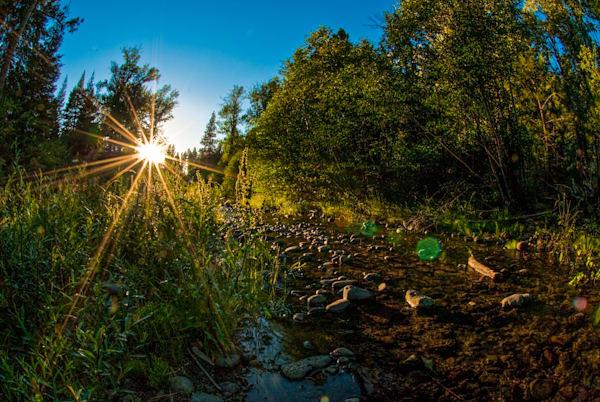 Oregon Sunburst
