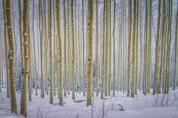 Aspens, Landscape, Photography, Sangre de Christo mountains, Santa Fe, winter, snow, New Mexico, Southwest
