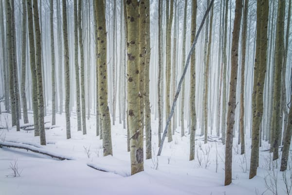 Aspens, Landscape, Photography, Sangre de Christo mountains, Santa Fe, winter, snow