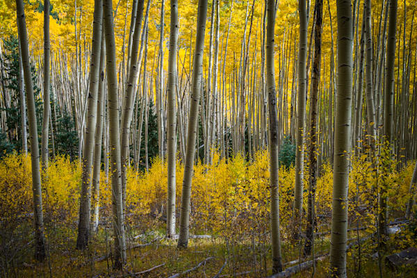Autumn, Landscape, Photography, Aspens, New Mexico, Sangre De Christo Mountains, Southwest, Fall,