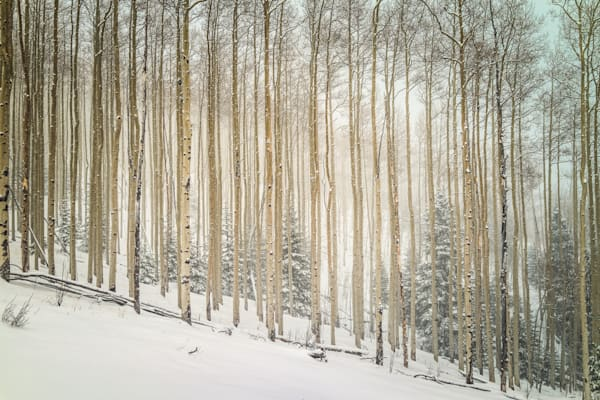 Aspens, Landscape, Photography, Sangre de Christo mountains, Santa Fe, winter, snow