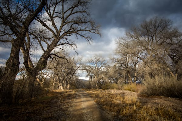 Cottonwoods, Landscape, New Mexico, Photography, Southwest, Espanola