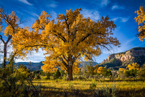 Autumn, Landscape, New Mexico, Photography, Southwest, cottonwood, fall, Chama River