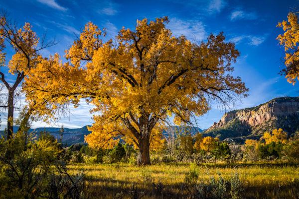 Autumn, Landscape, New Mexico, Photography, Southwest, cottonwood, fall, Chama River