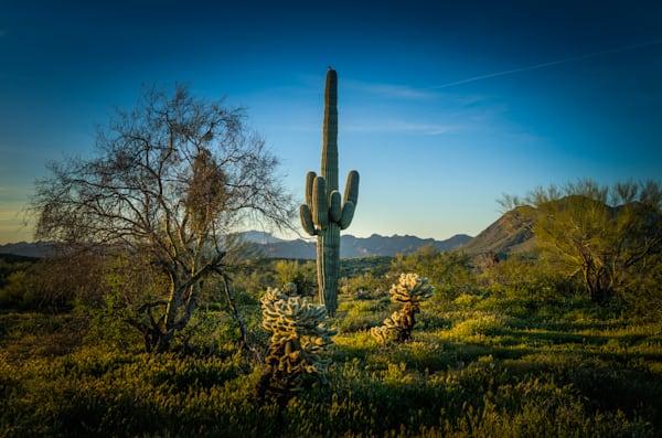 Arizona, Landscape, Photography, Southwest, Saguaro, Cactus, Dawn, Morning, Tonto National Forest