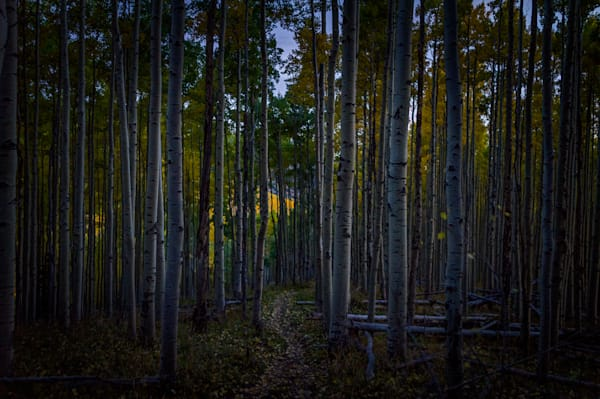 Autumn, Landscape, Photography, nocturne, Aspens, Sangre De Christo Mountains, Santa Fe, New Mexico