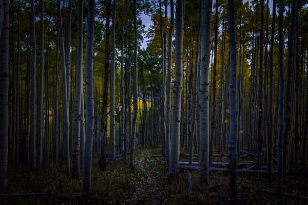 Autumn, Landscape, Photography, nocturne, Aspens, Sangre De Christo Mountains, Santa Fe, New Mexico