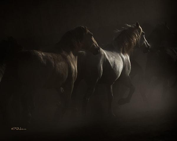 Renaissance Ponies