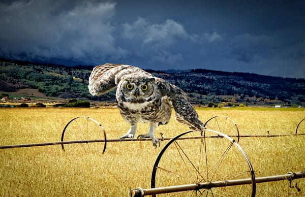 Those Eyes - Great Horned Owl - Fine art wall print - photography