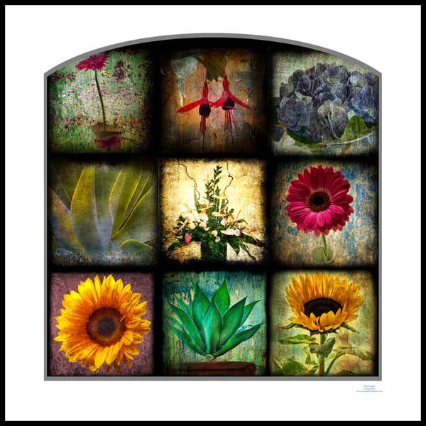 roy fraser seascapephotographer madeira flowers collage