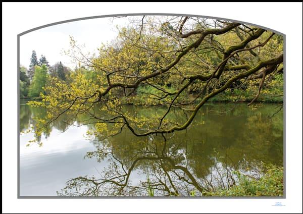 roy fraser seascapephotographer gravetye pond reflective tree3