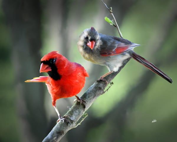 Pair Of Cardinals Art | MDM photo