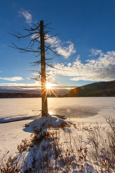 Moss lake Tree Winter Sun