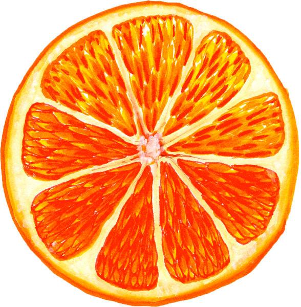 Inside of an orange slice watercolor painting