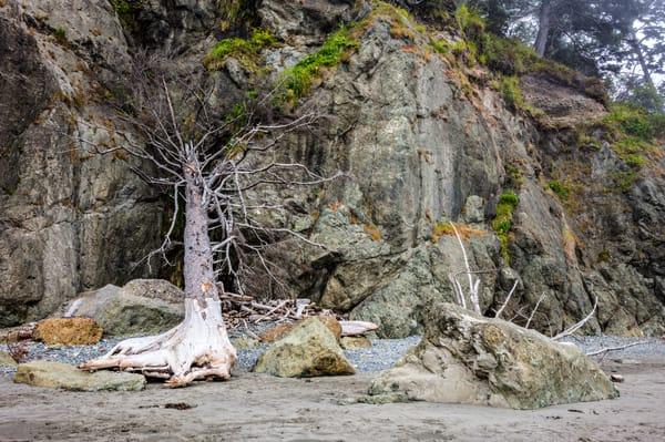 Fallen Tree Two