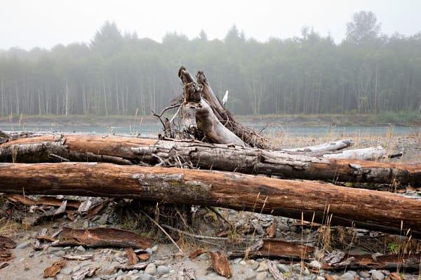 Seaside Trees Photography Art | frednewmanphotography
