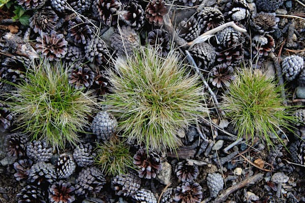 Photograph of tuffs of grass at Park Lake in the Helena National Forest