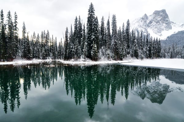 Emerald Lake Forest by Matt Jenkins | SavvyArt Market photography
