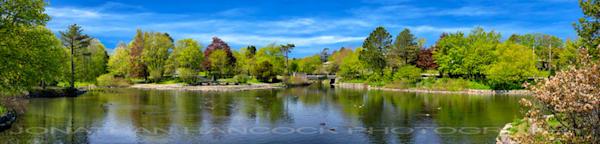 Bowring Park Pond Photography Art | Hancock Gallery