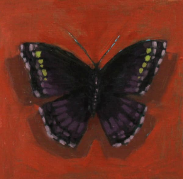 Shop for original paintings like Butterfly Color Studies, #5 oil on panel by Jeremy Couch.