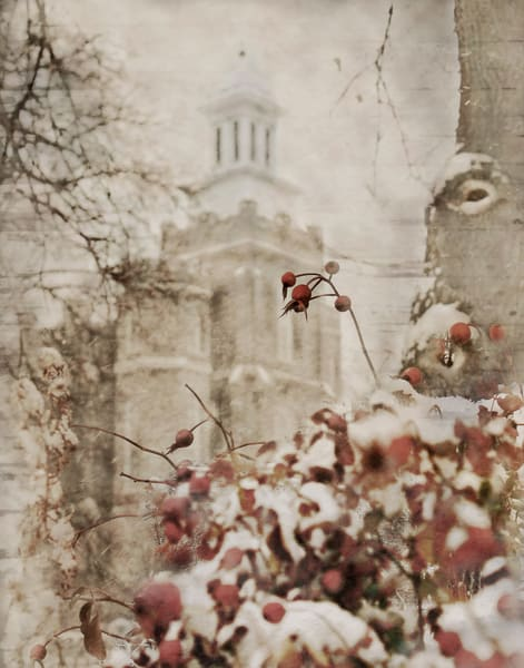 Logan Temple Winter Berry Art | Mandy Jane Williams Art