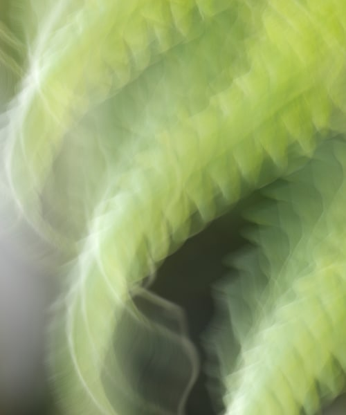 """World of Color #26"" Fine Art Abstract Green Fern Plant Photograph"