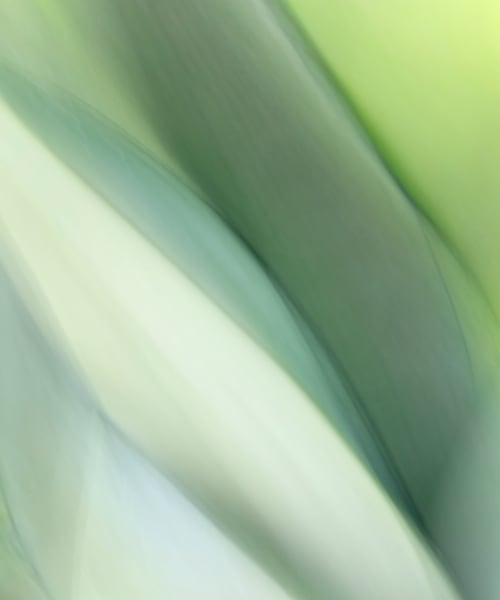 """World of Color #19"" Abstract Lime Green Fine Art Botanical Photography"