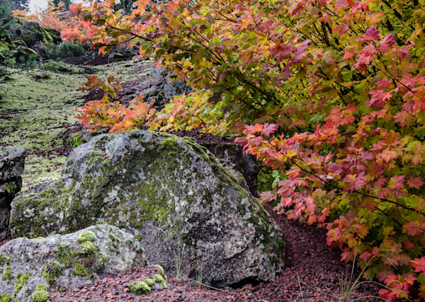 Brightly colored Autumn Leaves contrast Lava Rock