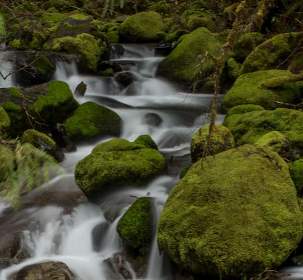 mossy rock creek
