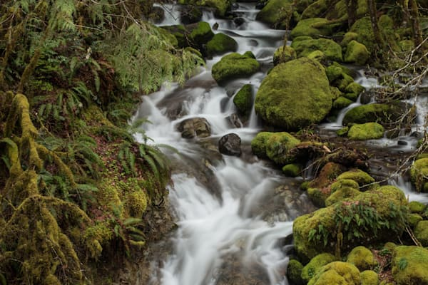 Mossy Creek 2 Photography Art   Barb Gonzalez Photography