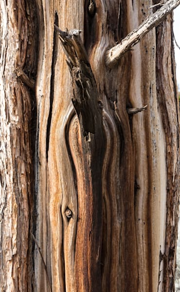 Badlands juniper bark