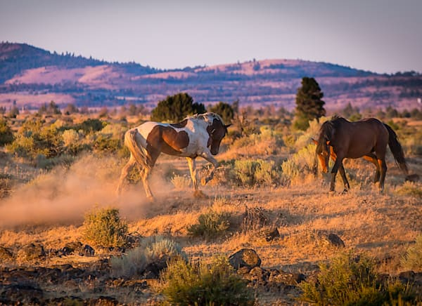 Stunning Horse Sunset  Photo for Sale By Barb Gonzalez Photography