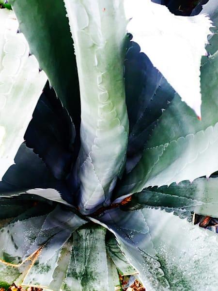 Orl 10017 Summer Succulent Symphony 15 Art | Irena Orlov Art