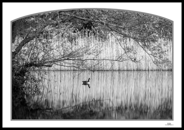 roy fraser seascapephotographer gravetye pond reflective duckbw