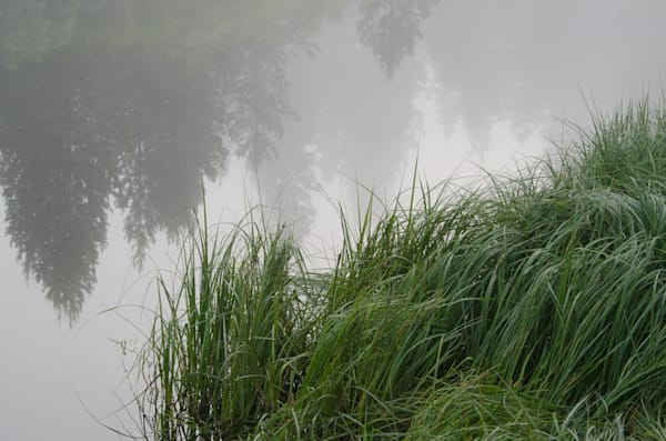 Foggy Grass