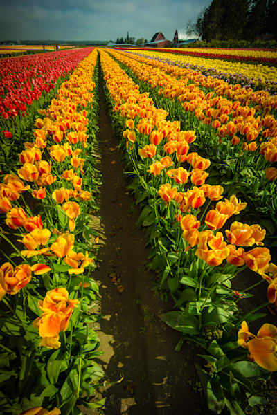 Rows of Color