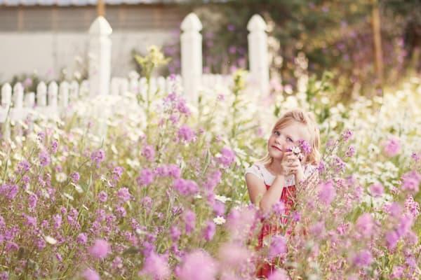 Flowers And Fence Art | Mandy Jane Williams Art