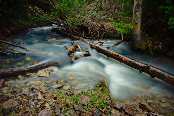 Forest Flows