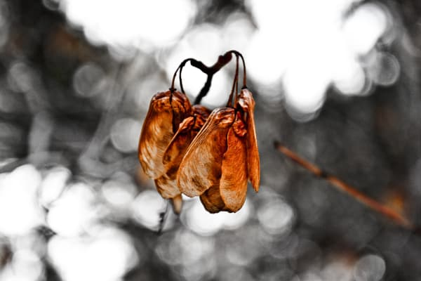 Natures Wing Photography Art | 1582 Photography