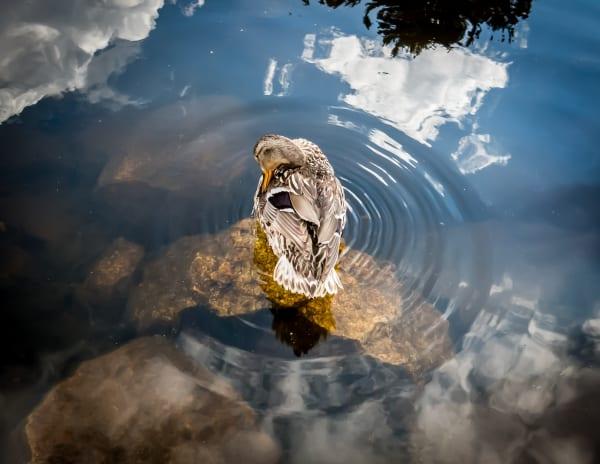 Nature Art Print | Custom Framing | Art Photographs