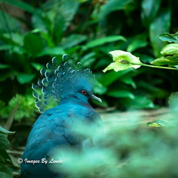 """Wild Bird  Photographs for Sale as Fine Art"""