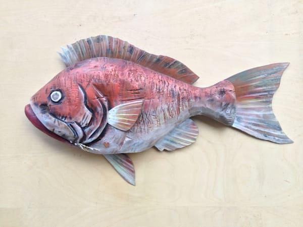 orange rainbowfin