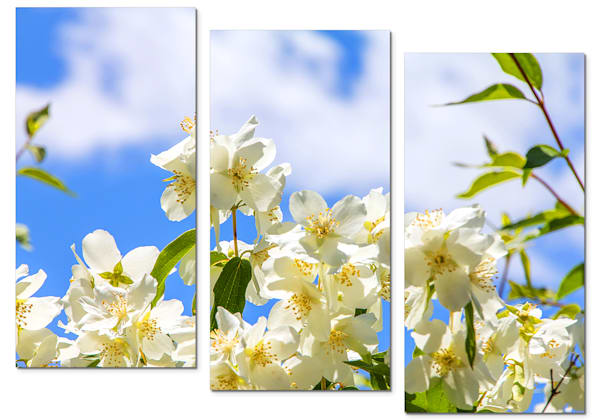 3-Piece Floral Canvas Wall Art - White