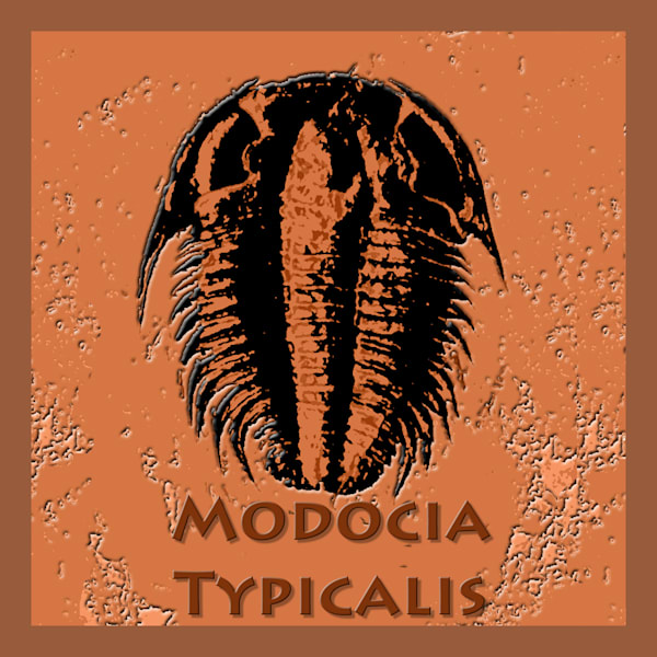 Modocia Typicalis Fossil Trilobite