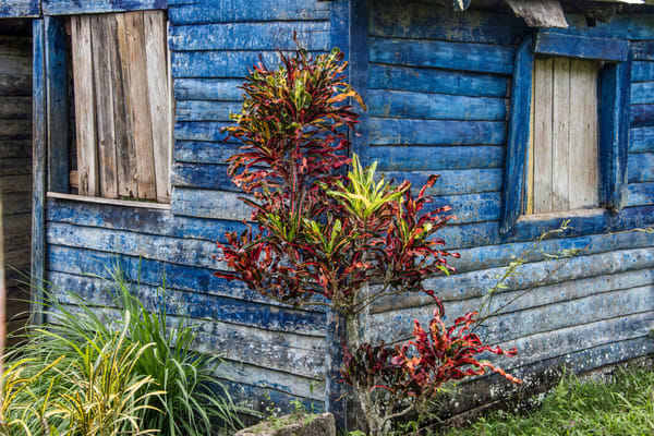 Art photograph of blue Caribbean shack with red plant in front.